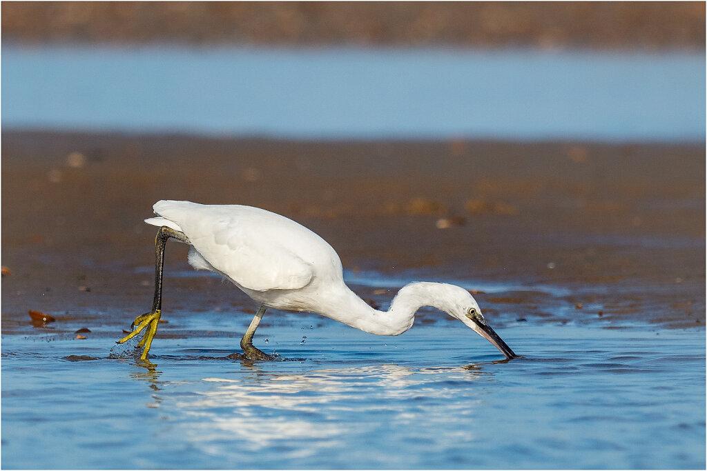 Seidenreiher-Egretta-garzetta-little-egret-Olympus-E-M1MarkII-Seidenreiher-Bearbeitet-Bearbeitet.jpg
