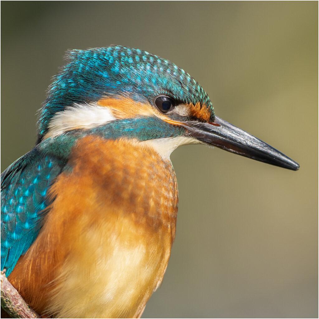 Racken und Eisvögel - Rollers and Kingfisher