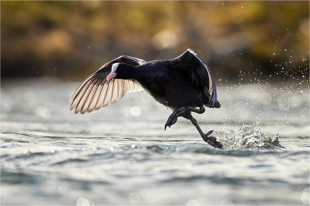 Bird Tracking Test Olympus OM-D E-M1X